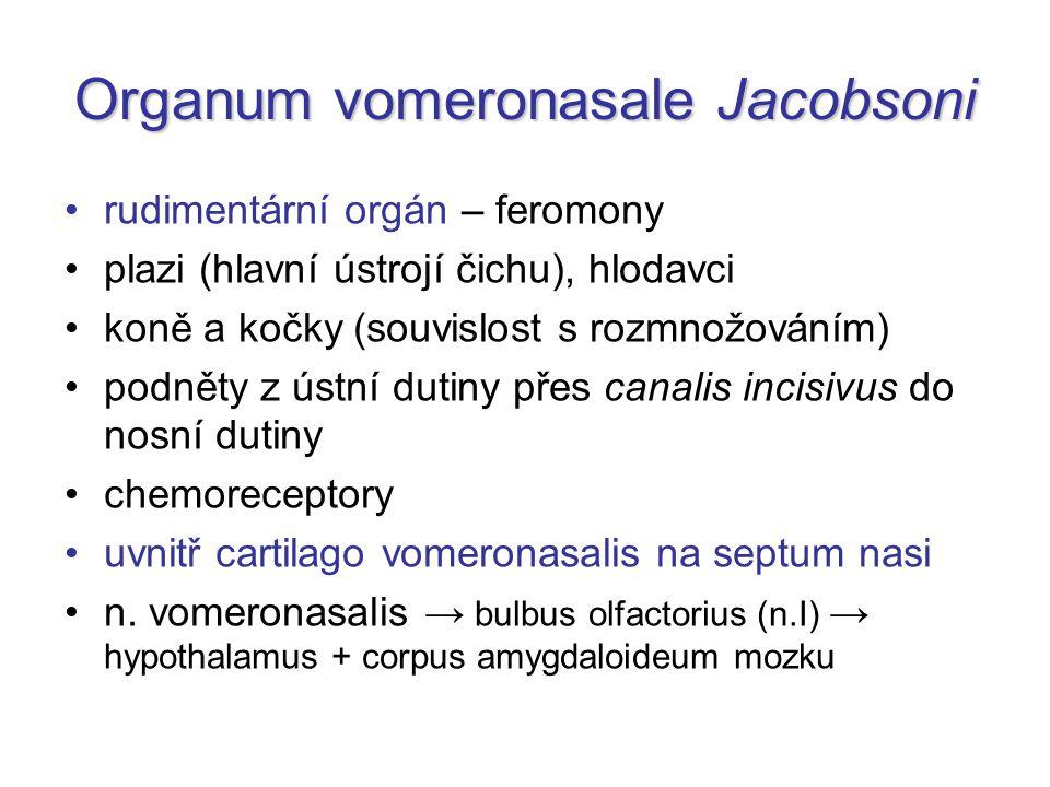 Organum vomeronasale Jacobsoni rudimentární orgán – feromony plazi (hlavní ústrojí čichu), hlodavci koně a kočky (souvislost s rozmnožováním) podněty