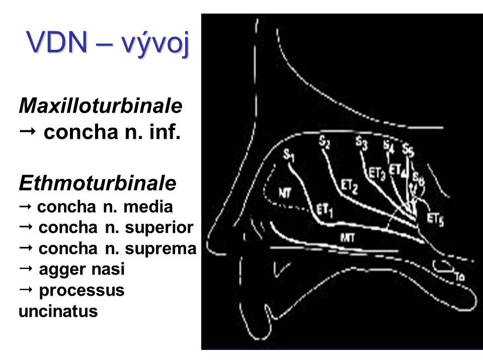 Maxilloturbinale  concha n. inf. Ethmoturbinale  concha n. media  concha n. superior  concha n. suprema  agger nasi  processus uncinatus VDN – v