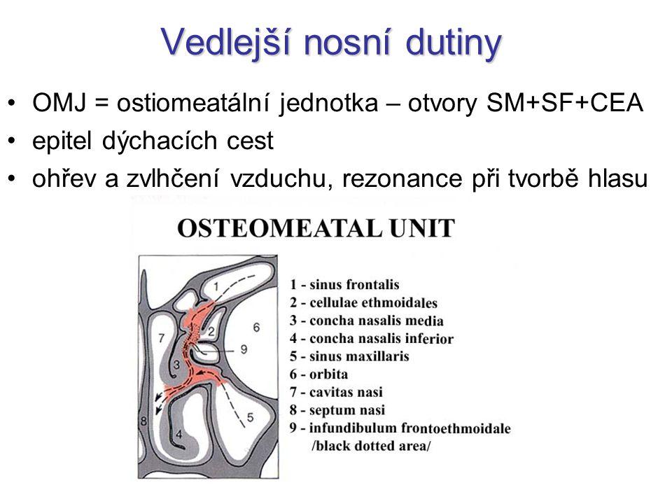 Vedlejší nosní dutiny OMJ = ostiomeatální jednotka – otvory SM+SF+CEA epitel dýchacích cest ohřev a zvlhčení vzduchu, rezonance při tvorbě hlasu