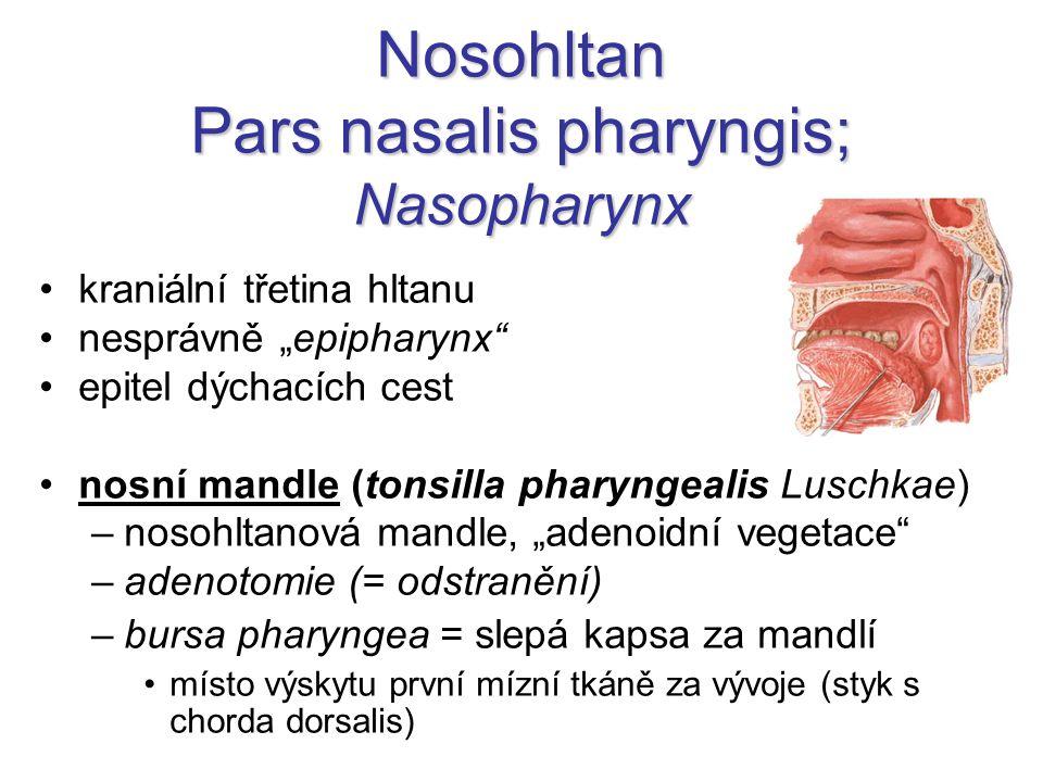 """Nosohltan Pars nasalis pharyngis; Nasopharynx kraniální třetina hltanu nesprávně """"epipharynx"""" epitel dýchacích cest nosní mandle (tonsilla pharyngeali"""