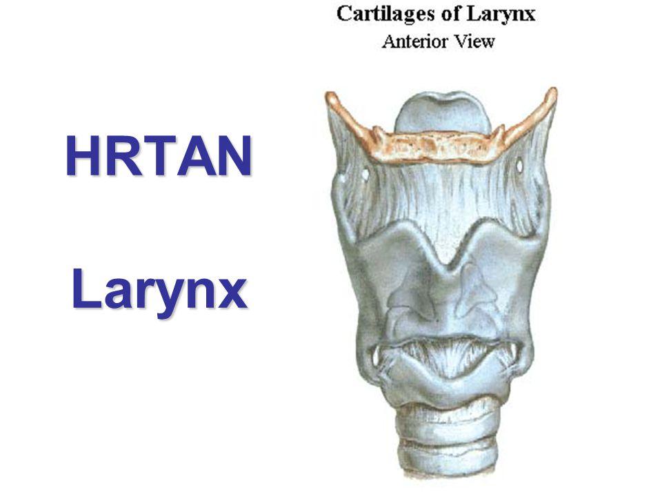 HRTAN Larynx