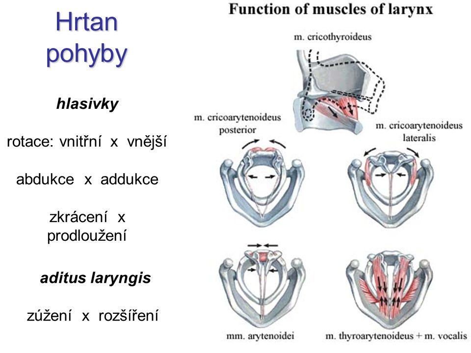 Hrtan pohyby hlasivky rotace: vnitřní x vnější abdukce x addukce zkrácení x prodloužení aditus laryngis zúžení x rozšíření