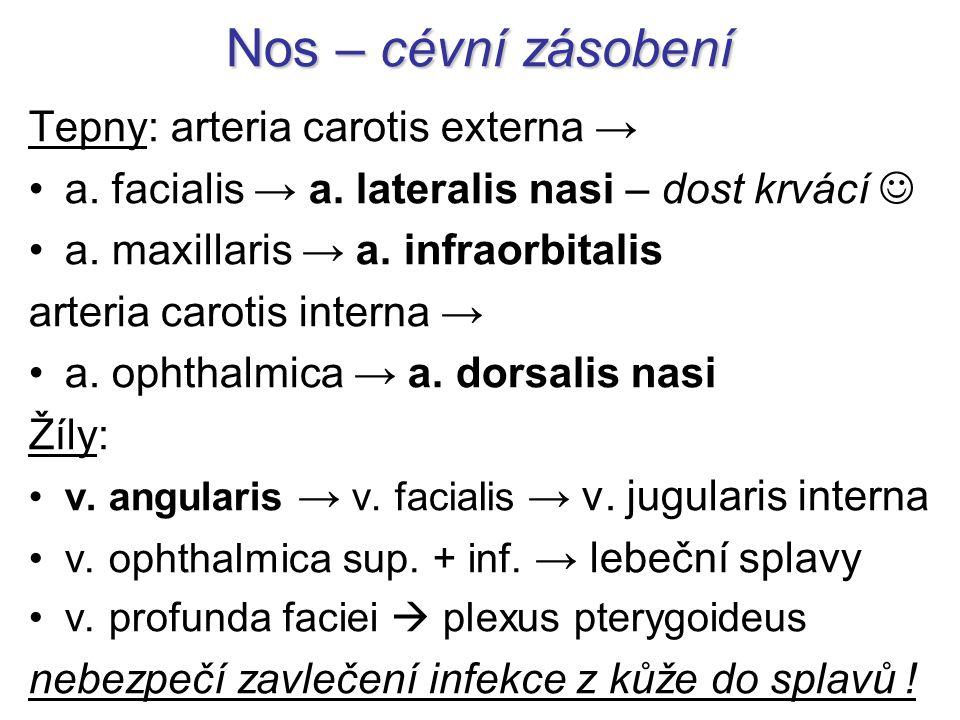 Nos – cévní zásobení Tepny: arteria carotis externa → a. facialis → a. lateralis nasi – dost krvácí a. maxillaris → a. infraorbitalis arteria carotis