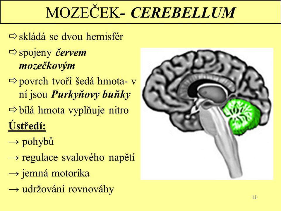 11 MOZEČEK- CEREBELLUM  skládá se dvou hemisfér  spojeny červem mozečkovým  povrch tvoří šedá hmota- v ní jsou Purkyňovy buňky  bílá hmota vyplňuj