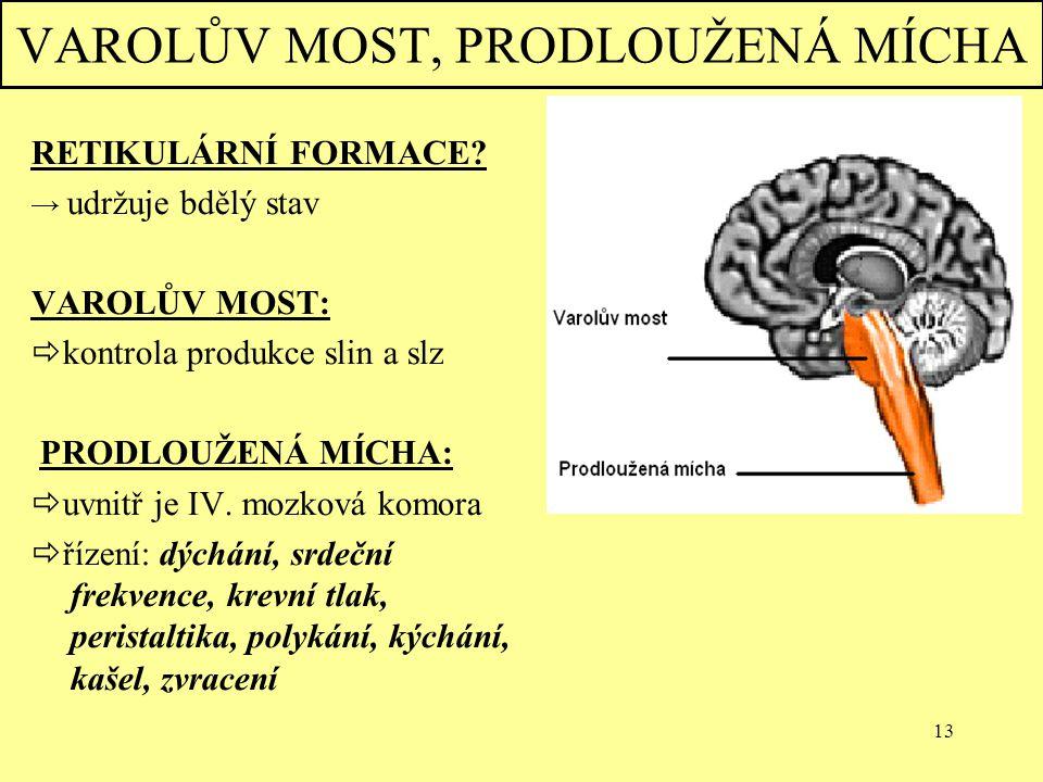 13 VAROLŮV MOST, PRODLOUŽENÁ MÍCHA RETIKULÁRNÍ FORMACE? → udržuje bdělý stav VAROLŮV MOST:  kontrola produkce slin a slz PRODLOUŽENÁ MÍCHA:  uvnitř