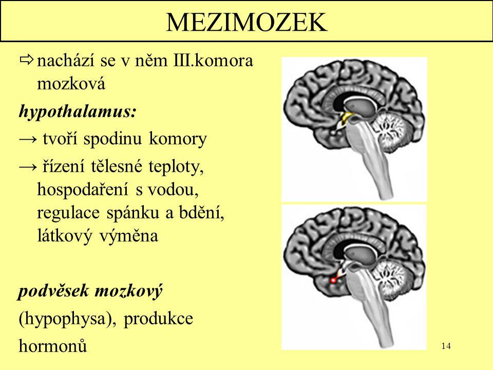 14 MEZIMOZEK  nachází se v něm III.komora mozková hypothalamus: → tvoří spodinu komory → řízení tělesné teploty, hospodaření s vodou, regulace spánku
