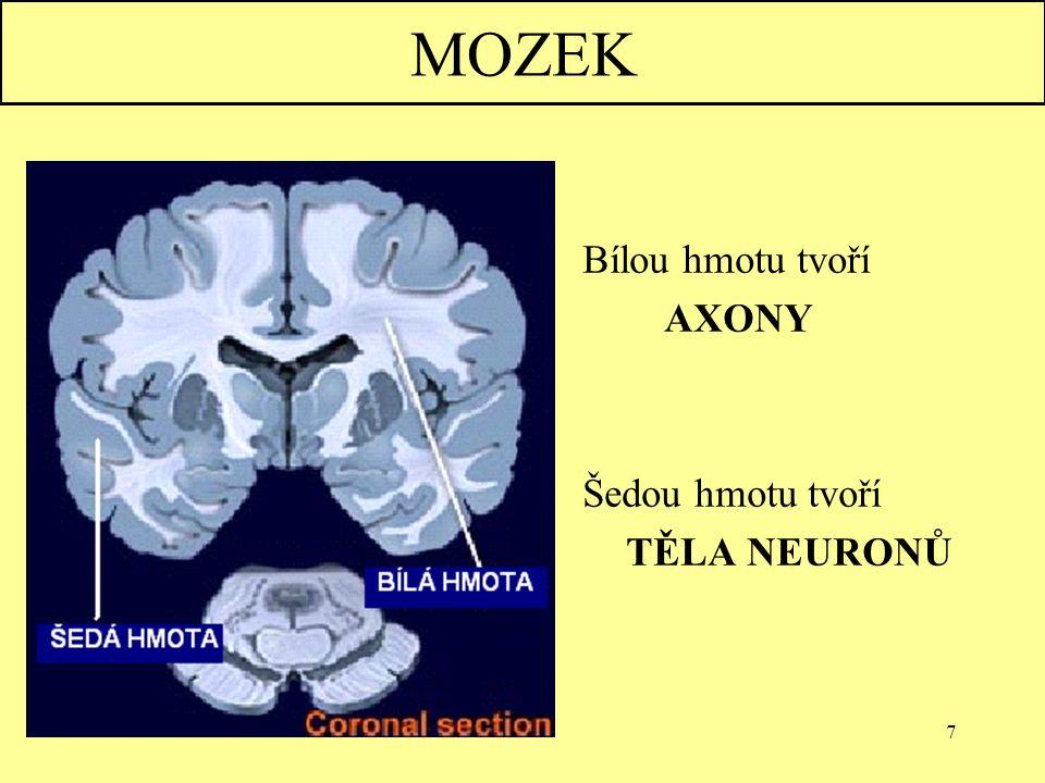 8 KONCOVÝ MOZEK-CEREBRUM  tvoří 85% hmotnosti mozku  složen ze dvou hemisfér  v hemisférách jsou mozkové komory, v nich se tvoří mozkomíšní mok  povrch je kryt pláštěm (pallium) z šedé hmoty  rozčleněn ne brázdy a laloky: A)čelní B)temenní C)týlní D) spánkový
