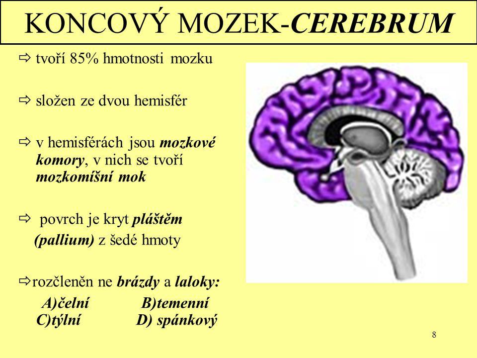 8 KONCOVÝ MOZEK-CEREBRUM  tvoří 85% hmotnosti mozku  složen ze dvou hemisfér  v hemisférách jsou mozkové komory, v nich se tvoří mozkomíšní mok  p
