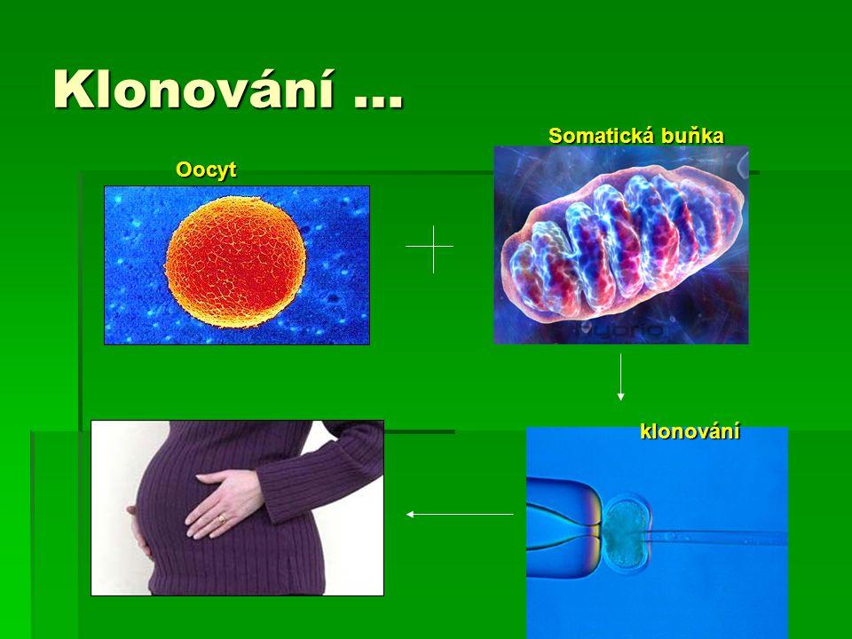 Klonování … Somatická buňka Oocyt klonování