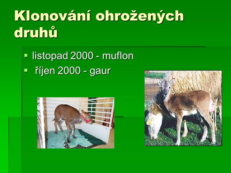 Klonování ohrožených druhů  listopad 2000 - muflon  říjen 2000 - gaur