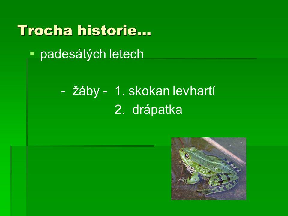Trocha historie…   padesátých letech - žáby - 1. skokan levhartí 2. drápatka