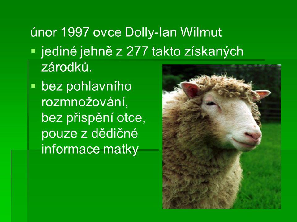únor 1997 ovce Dolly-Ian Wilmut   jediné jehně z 277 takto získaných zárodků.