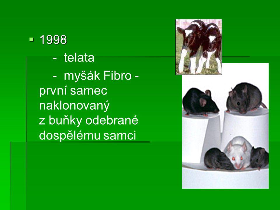 1998 - telata - myšák Fibro - první samec naklonovaný z buňky odebrané dospělému samci
