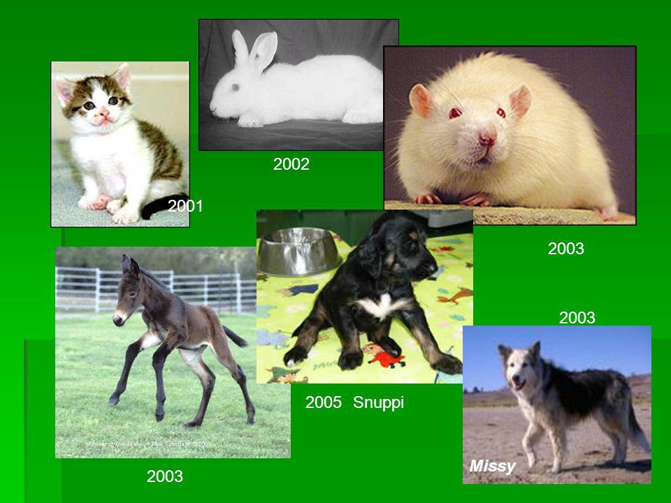 Snuppi Missy 2001 2002 2003 2005 2003