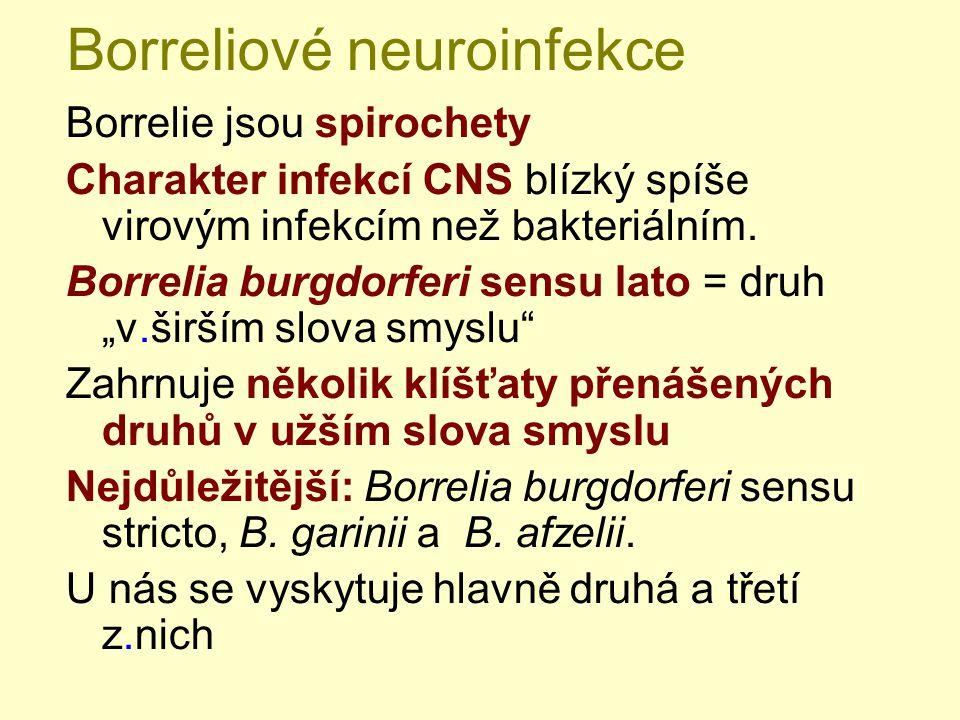 Borreliové neuroinfekce Borrelie jsou spirochety Charakter infekcí CNS blízký spíše virovým infekcím než bakteriálním. Borrelia burgdorferi sensu lato
