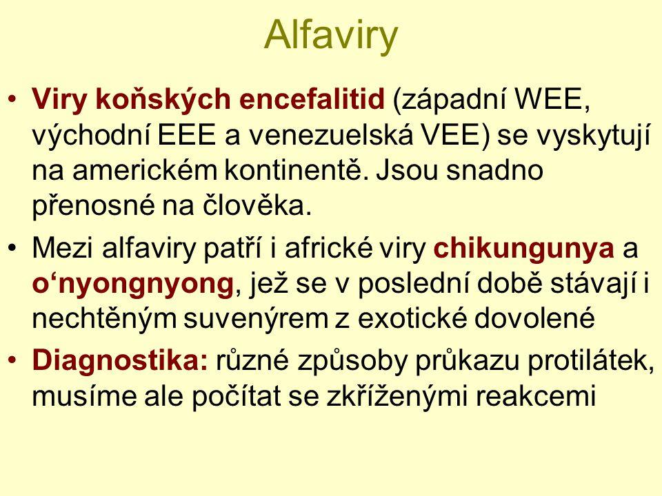 Alfaviry Viry koňských encefalitid (západní WEE, východní EEE a venezuelská VEE) se vyskytují na americkém kontinentě. Jsou snadno přenosné na člověka