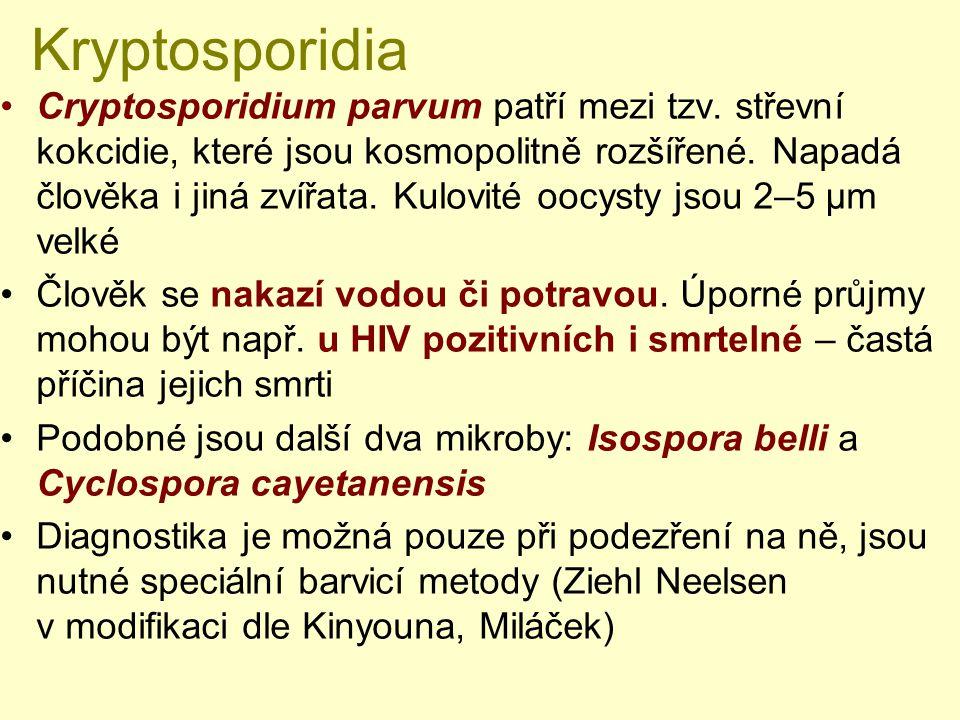 Kryptosporidia Cryptosporidium parvum patří mezi tzv. střevní kokcidie, které jsou kosmopolitně rozšířené. Napadá člověka i jiná zvířata. Kulovité ooc