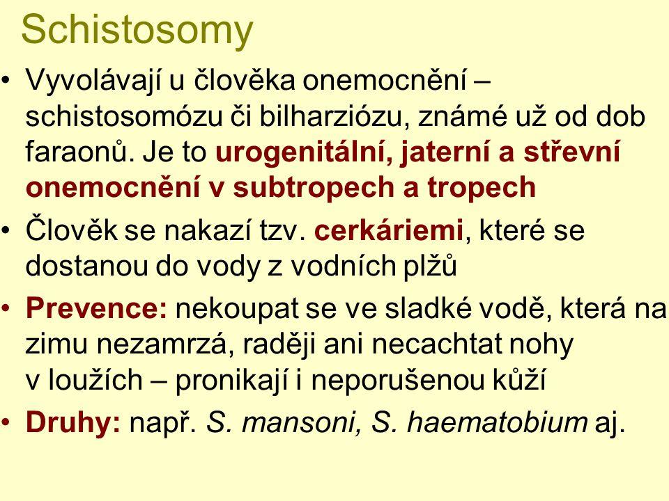 Schistosomy Vyvolávají u člověka onemocnění – schistosomózu či bilharziózu, známé už od dob faraonů. Je to urogenitální, jaterní a střevní onemocnění