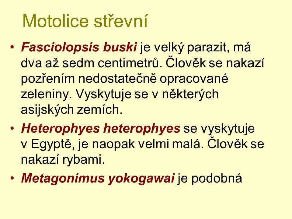 Motolice střevní Fasciolopsis buski je velký parazit, má dva až sedm centimetrů. Člověk se nakazí pozřením nedostatečně opracované zeleniny. Vyskytuje