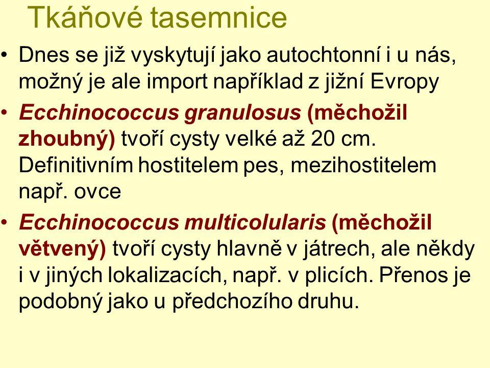 Tkáňové tasemnice Dnes se již vyskytují jako autochtonní i u nás, možný je ale import například z jižní Evropy Ecchinococcus granulosus (měchožil zhou