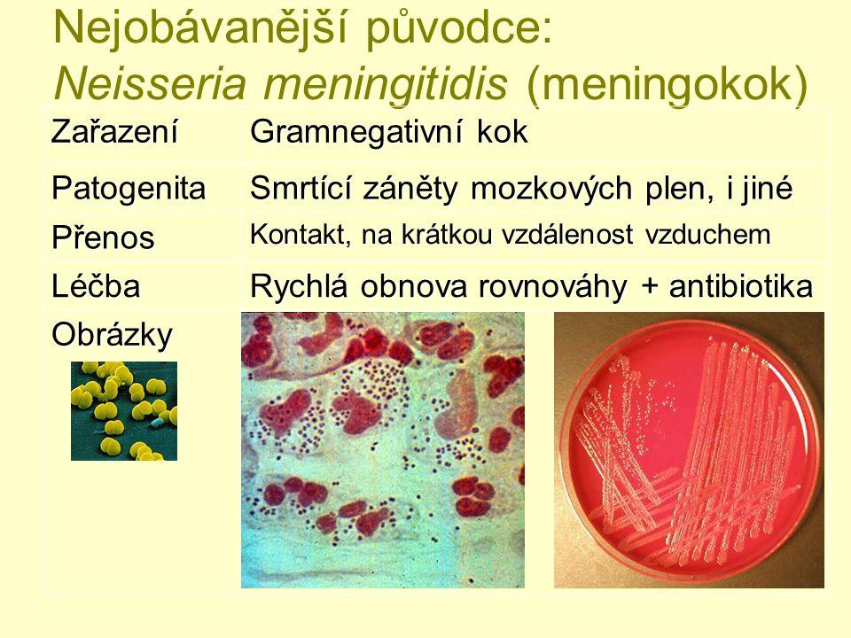 Nejobávanější původce: Neisseria meningitidis (meningokok) Zařazení Gramnegativní kok Patogenita Smrtící záněty mozkových plen, i jiné Přenos Kontakt,
