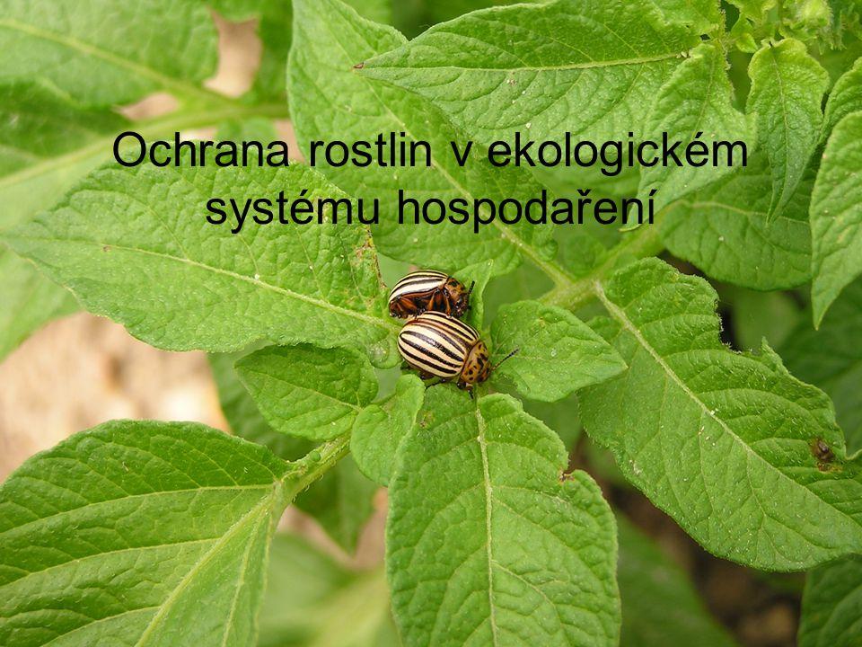 Ochrana rostlin v ekologickém hospodaření Mimořádný důraz na prevenci Odstranění příčin výskytu škodlivých činitelů a až poté léčení Využití přirozené regulace škodlivých činitelů