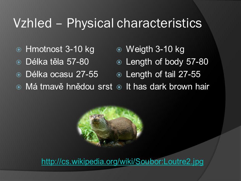 Jídlo – Food  Vydra jí ryby  Otter eats fish http://www.mrk.cz/r/atlasy/atlas_ryb/maloostni/kaproviti/kapr_obecny/