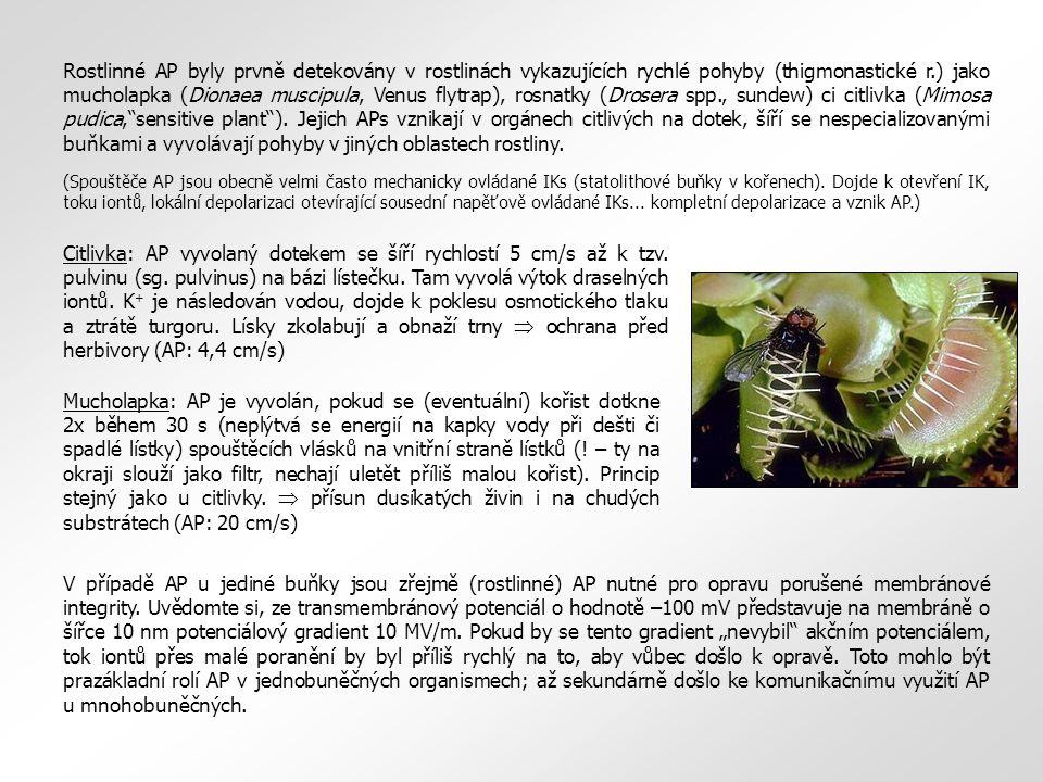 Rostlinné AP byly prvně detekovány v rostlinách vykazujících rychlé pohyby (thigmonastické r.) jako mucholapka (Dionaea muscipula, Venus flytrap), rosnatky (Drosera spp., sundew) ci citlivka (Mimosa pudica, sensitive plant ).