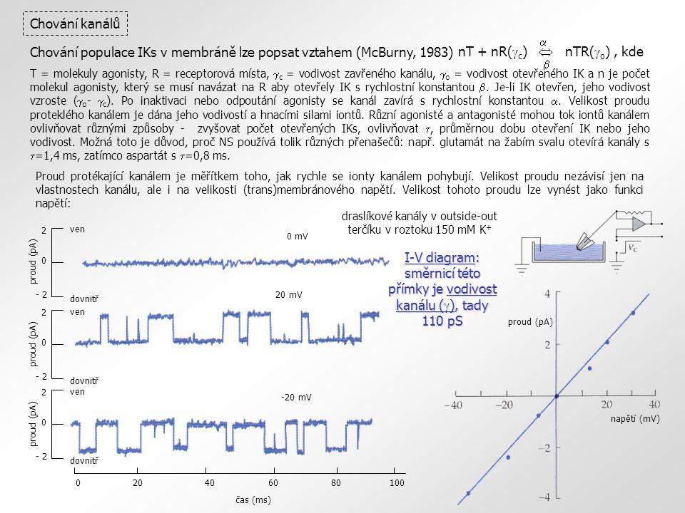 0 mV 2 0 - 2 proud (pA) ven dovnitř 2 0 - 2 proud (pA) ven dovnitř 20 mV 2 0 - 2 proud (pA) ven dovnitř -20 mV020406080100 čas (ms) napětí (mV) proud (pA) Chování kanálů I-V diagram: směrnicí této přímky je vodivost kanálu (  ), tady 110 pS draslíkové kanály v outside-out terčíku v roztoku 150 mM K + nT + nR(  c )  nTR(  o ), kde   Chování populace IKs v membráně lze popsat vztahem (McBurny, 1983) T = molekuly agonisty, R = receptorová místa,  c = vodivost zavřeného kanálu,  o = vodivost otevřeného IK a n je počet molekul agonisty, který se musí navázat na R aby otevřely IK s rychlostní konstantou .