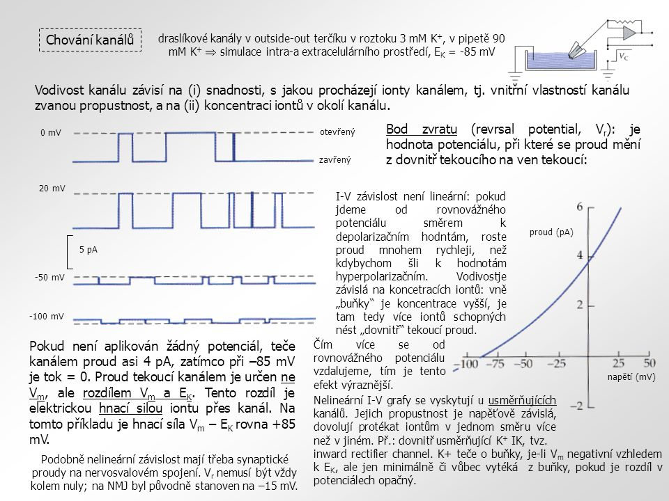 draslíkové kanály v outside-out terčíku v roztoku 3 mM K +, v pipetě 90 mM K +  simulace intra-a extracelulárního prostředí, E K = -85 mV Chování kanálů 0 mV 20 mV -50 mV -100 mV 5 pA otevřený zavřenýproud (pA) napětí (mV) Vodivost kanálu závisí na (i) snadnosti, s jakou procházejí ionty kanálem, tj.