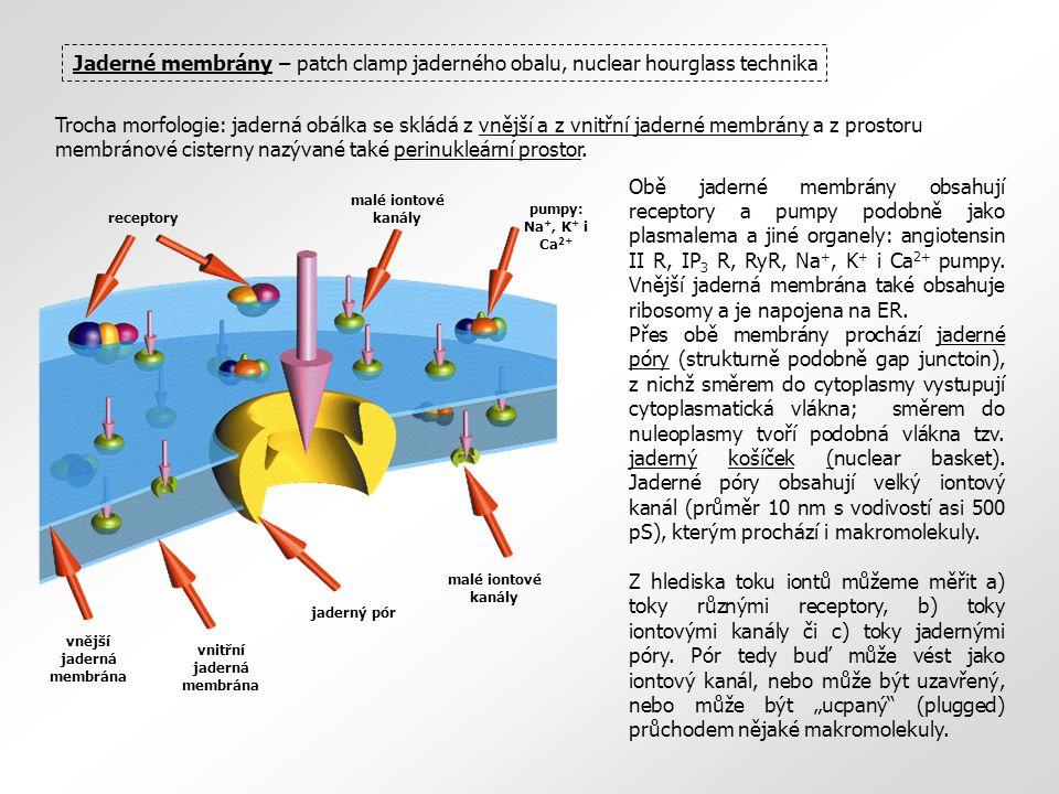 roztok elektrody patchová ME jádro fluorescenční sondy patchová ME Patch clamp jaderného obalu – mikroskopický přístup Jaderný obal je daleko složitější než plasmatická membrána.