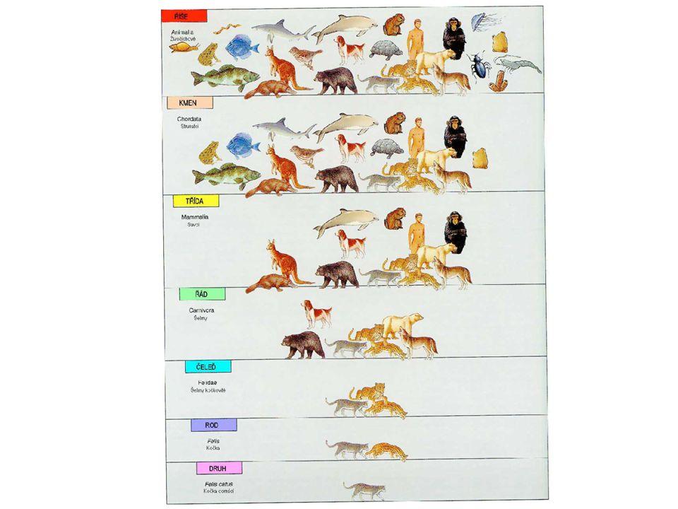Systém organismů Říše: Rostliny Oddělení Třída čeleď Rod druh Říše: Živočichové kmen třída řád čeleď rod druh