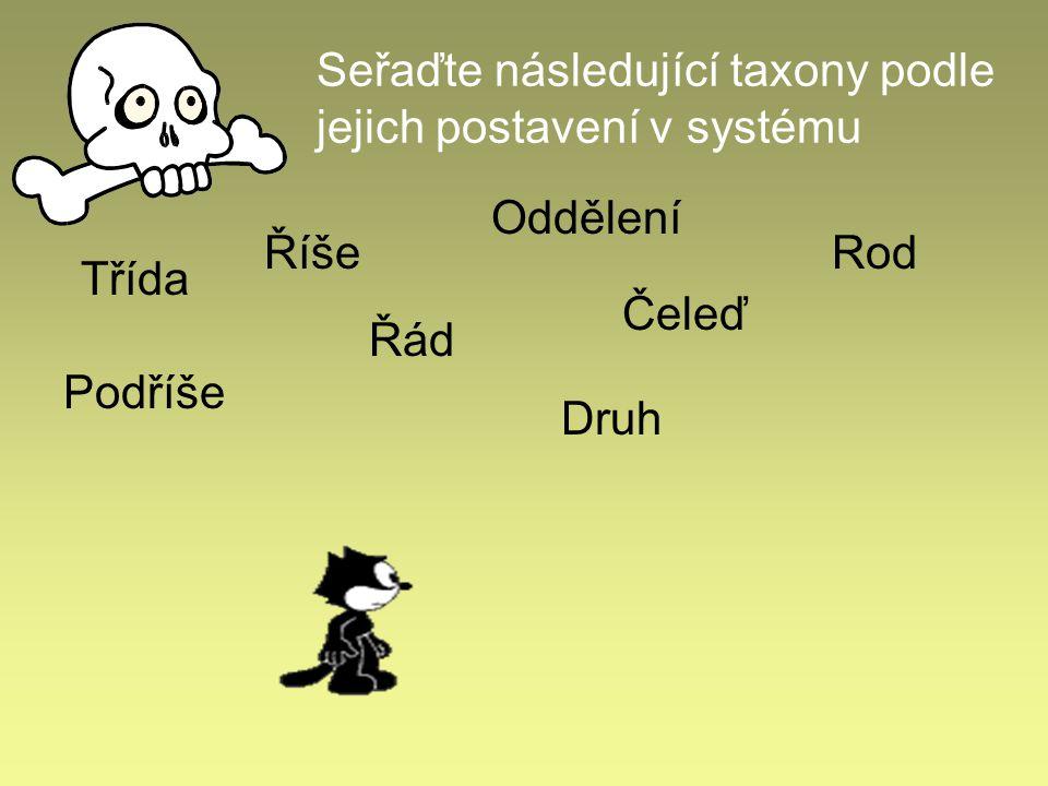 Seřaďte následující taxony podle jejich postavení v systému Třída Říše Čeleď Řád Podříše Oddělení Rod Druh
