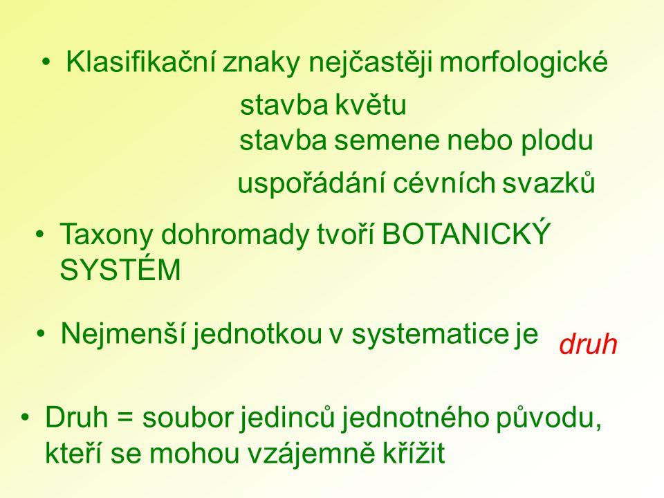 Klasifikační znaky nejčastěji morfologické stavba květu stavba semene nebo plodu uspořádání cévních svazků Druh = soubor jedinců jednotného původu, kt