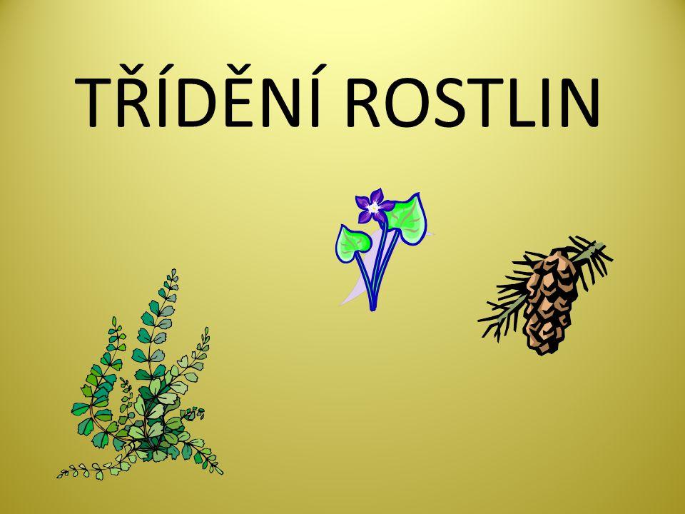 TŘÍDĚNÍ ROSTLIN