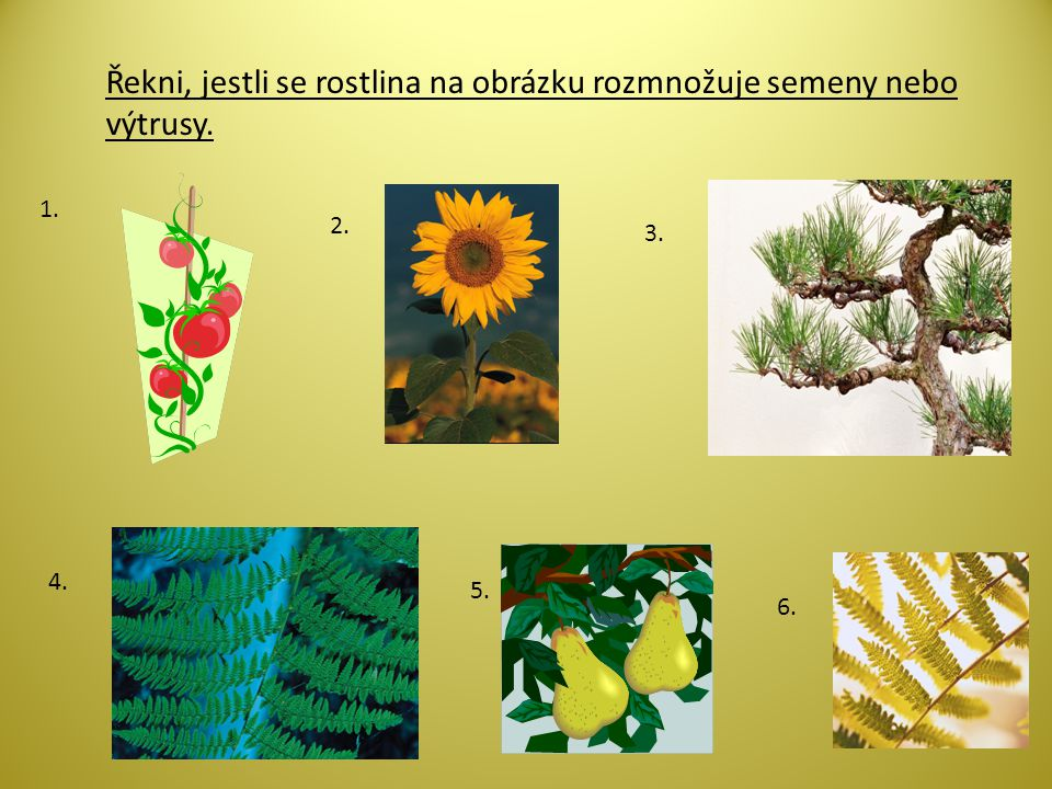 Řekni, jestli se rostlina na obrázku rozmnožuje semeny nebo výtrusy. 1. 2. 3. 4. 5. 6.