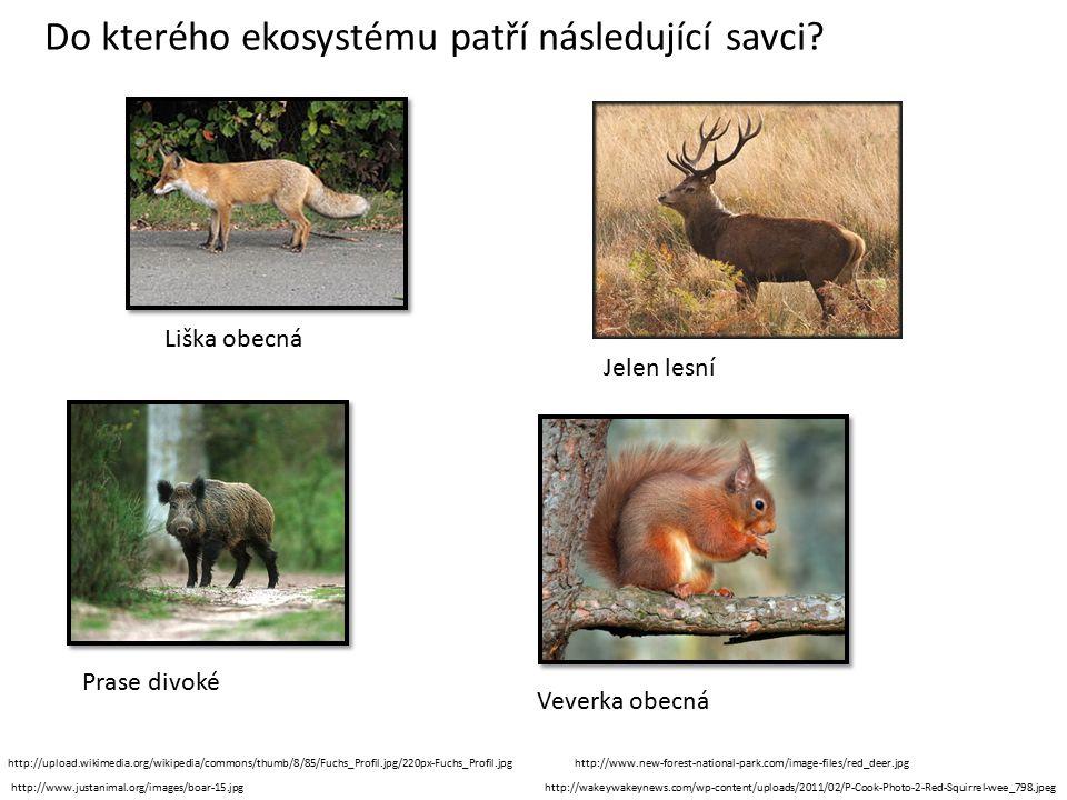 Liška obecná Jelen lesní Prase divoké Veverka obecná Do kterého ekosystému patří následující savci.