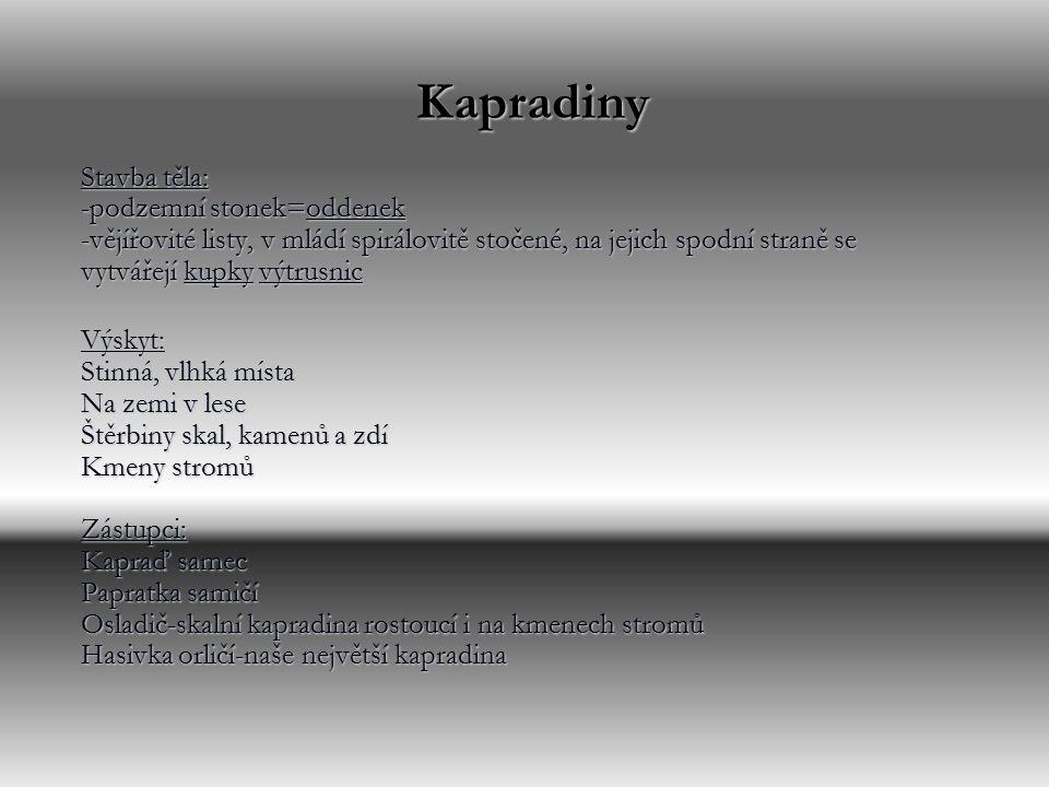 Kapradiny