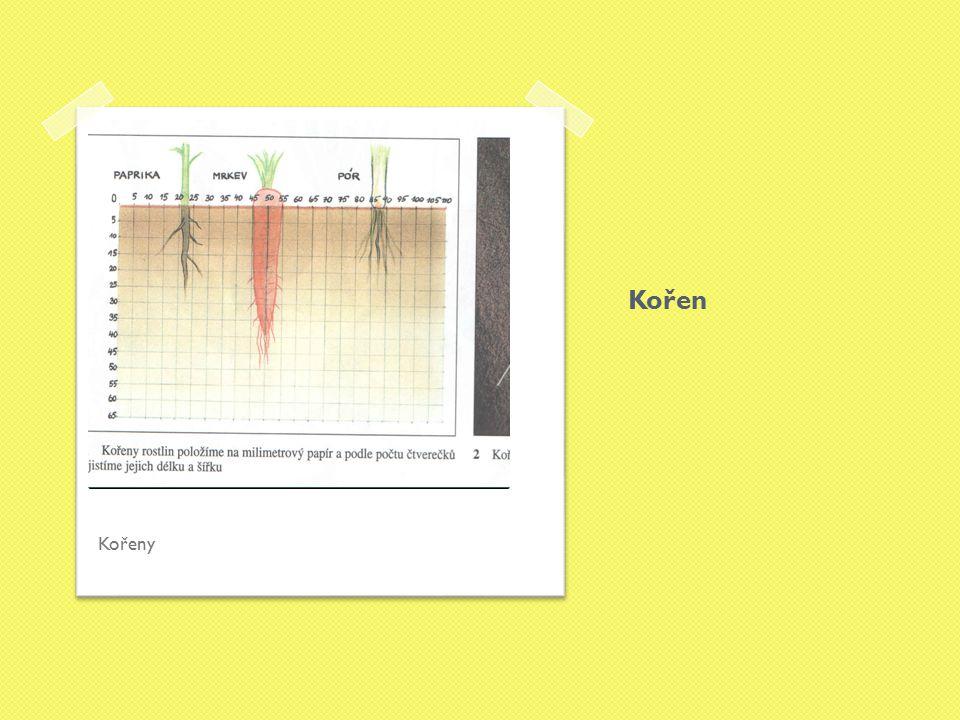 Ko ř en tenké tlusté Úkol: porovnej obrázky a napiš rostlinu, která má kořen tlustý a která má kořen tenký.