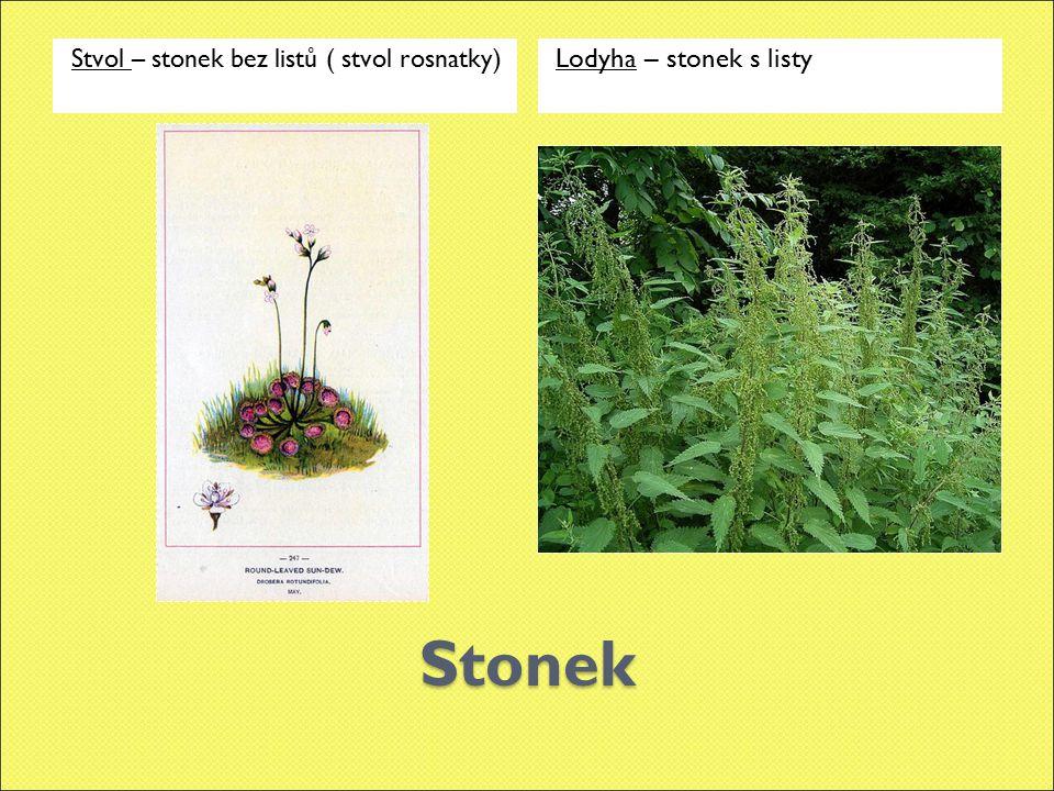Květy Květ jednoduchý ( jednotlivé květy clemantisu) Květ složený – květenství ( květenství kaštanu – jírovce)