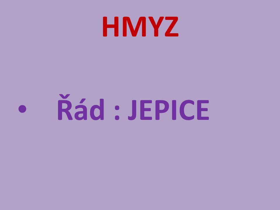 HMYZ Řád : JEPICE