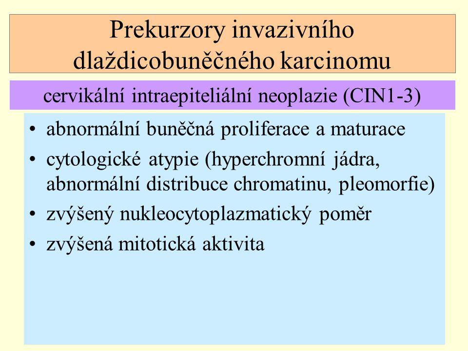 Prekurzory invazivního dlaždicobuněčného karcinomu abnormální buněčná proliferace a maturace cytologické atypie (hyperchromní jádra, abnormální distri