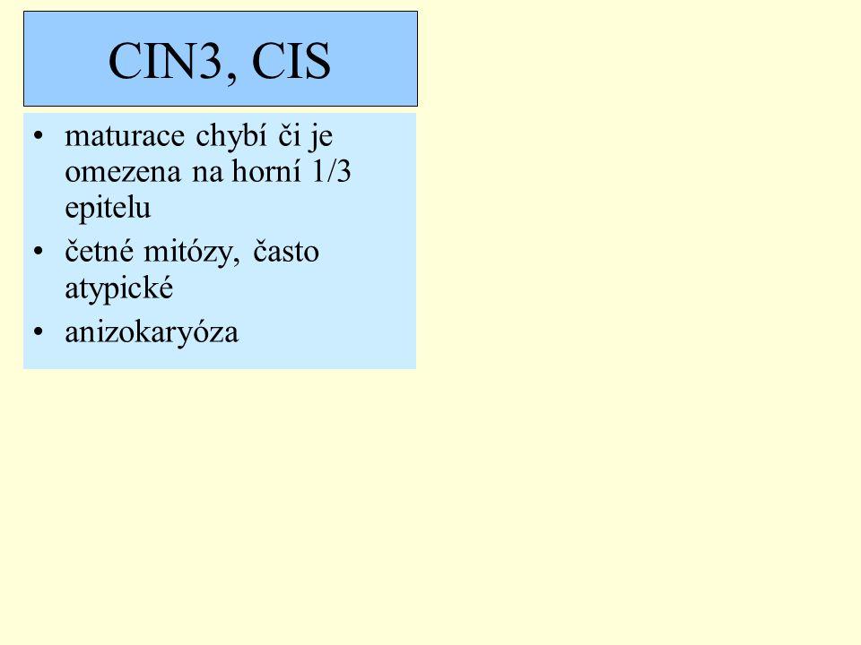 maturace chybí či je omezena na horní 1/3 epitelu četné mitózy, často atypické anizokaryóza CIN3, CIS
