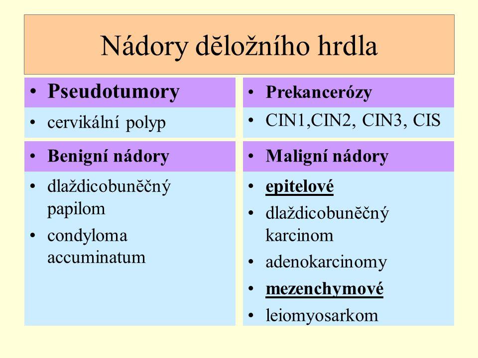 Nádory dĕložního hrdla Pseudotumory CIN1,CIN2, CIN3, CIS cervikální polyp Benigní nádory dlaždicobunĕčný papilom condyloma accuminatum Prekancerózy Ma