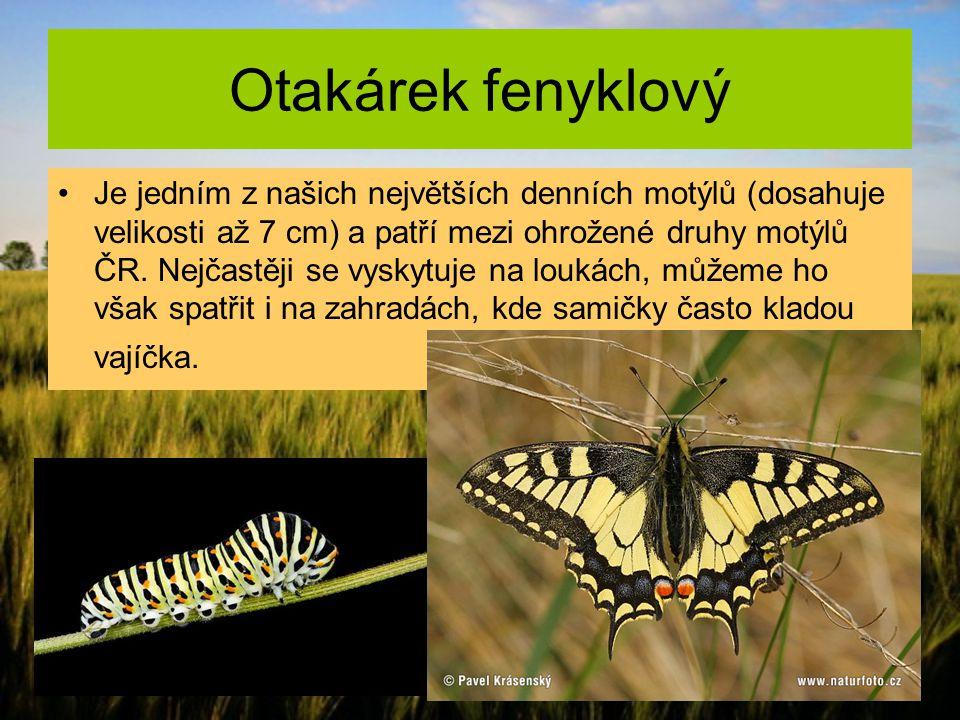 Otakárek fenyklový Je jedním z našich největších denních motýlů (dosahuje velikosti až 7 cm) a patří mezi ohrožené druhy motýlů ČR. Nejčastěji se vysk