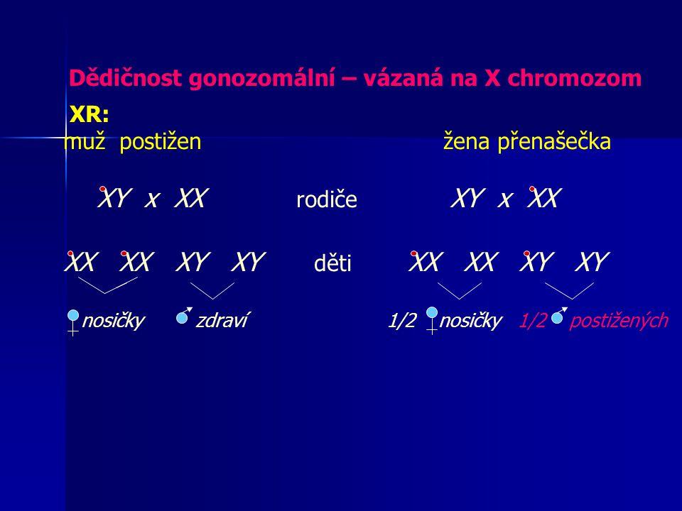 XR: muž postižen žena přenašečka XY x XX rodiče XY x XX XX XX XY XY děti XX XX XY XY nosičky zdraví 1/2 nosičky 1/2 postižených Dědičnost gonozomální