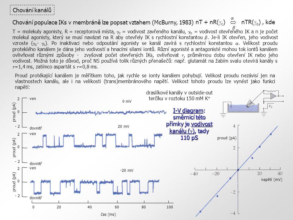 0 mV 2 0 - 2 proud (pA) ven dovnitř 2 0 - 2 proud (pA) ven dovnitř 20 mV 2 0 - 2 proud (pA) ven dovnitř -20 mV 020406080100 čas (ms) napětí (mV) proud (pA) Chování kanálů I-V diagram: směrnicí této přímky je vodivost kanálu (  ), tady 110 pS draslíkové kanály v outside-out terčíku v roztoku 150 mM K + nT + nR(  c )  nTR(  o ), kde   Chování populace IKs v membráně lze popsat vztahem (McBurny, 1983) T = molekuly agonisty, R = receptorová místa,  c = vodivost zavřeného kanálu,  o = vodivost otevřeného IK a n je počet molekul agonisty, který se musí navázat na R aby otevřely IK s rychlostní konstantou .