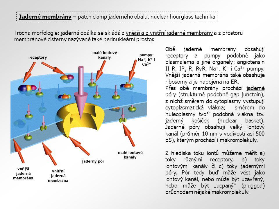 Jaderné membrány – patch clamp jaderného obalu, nuclear hourglass technika Trocha morfologie: jaderná obálka se skládá z vnější a z vnitřní jaderné membrány a z prostoru membránové cisterny nazývané také perinukleární prostor.