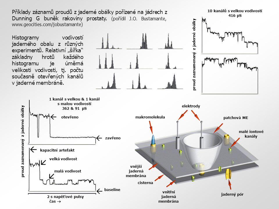 patchová ME elektrody makromolekula jaderný pór malé iontové kanály vnější jaderná membrána vnitřní jaderná membrána cisterna čas  proud zaznamenaný z jaderné obálky 10 kanálů s velkou vodivostí 416 pS proud zaznamenaný z jaderné obálky 1 kanál s velkou & 1 kanál s malou vodivostí 362 & 91 pS otevřeno zavřeno baseline kapacitní artefakt velká vodivost malá vodivost 2 s napěťové pulsy Příklady záznamů proudů z jaderné obálky pořízené na jádrech z Dunning G buněk rakoviny prostaty.