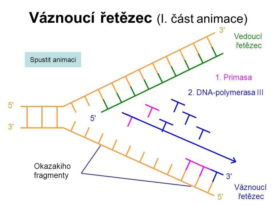 Váznoucí řetězec (I.část animace) Váznoucí řetězec 5 3 5 3 Okazakiho fragmenty 1.